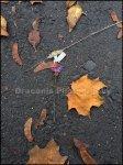 blume_asphalt_bearb.jpg